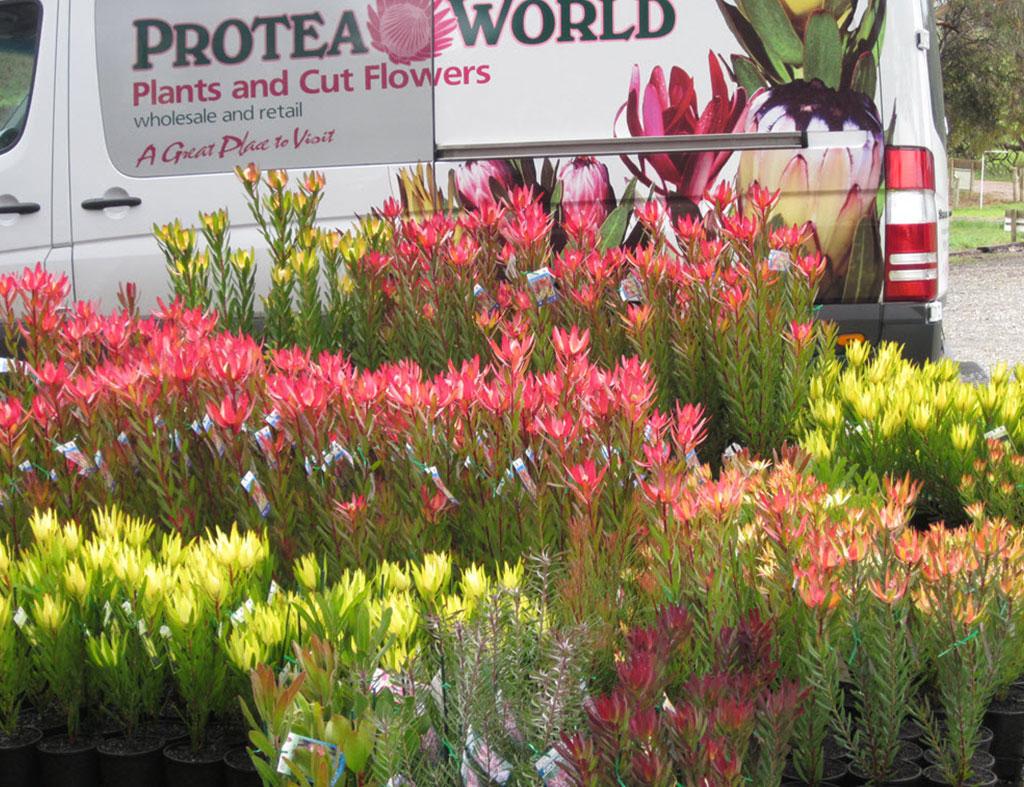 Garden Nursery Online Parijat Parijatak Harshringar Buy